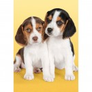 Clementoni - Puzzle mini My Puppies 21138